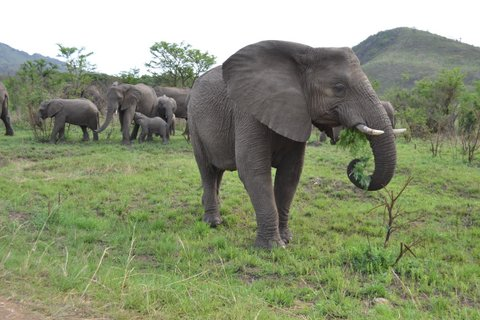 Fantastic Elephant Experience.